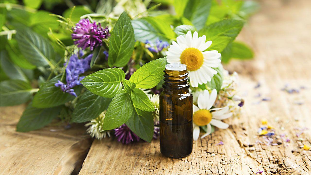 Hildegard Medizin Pflanzen